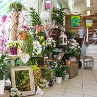fleurs-des-pres-amiens-quartier-des-halles